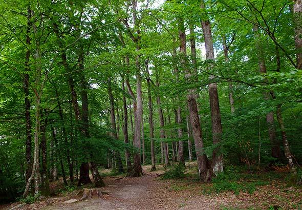 Histoire de la forêt Landaise