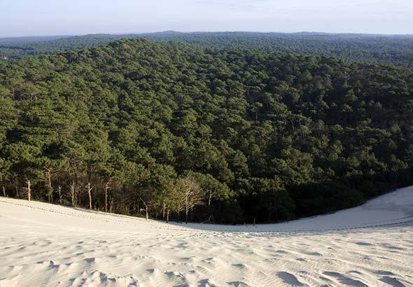 Les types d'arbres dans les forêts landaises